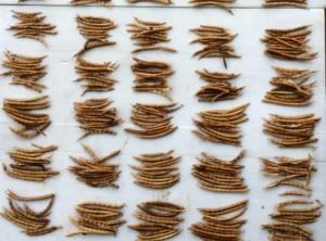 収穫した小豆
