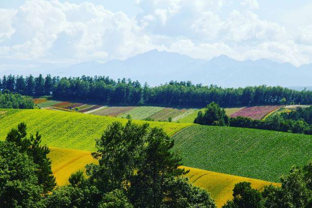 美瑛の農耕地